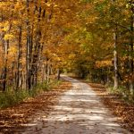 Russell Woods Forest Preserve Fall