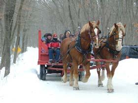 Belgian horses pulling sleigh