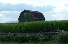 Red Barn surrounded by high corn